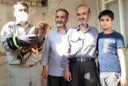 مسئولیت پذیری شهروند ماهدشتی در نجات عقاب صحرایی آسیب دیده